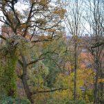 Wald als ökologische Senke